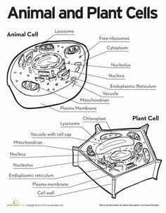 Worksheets Cell Parts Worksheet plant cell label worksheet